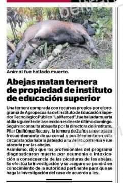 POR PICADURA DE ABEJAS MUERE GANADO VACUNO DE ESTUDIANTES DE AGROPECUARIA DE INSTITUTO LA MERCED